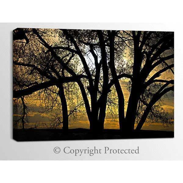 Picture of Cottonwoods at Dusk 48x32 *D