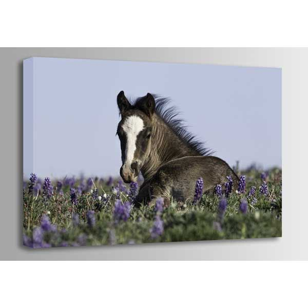 Picture of Foal in the Flowers 36x24 *D