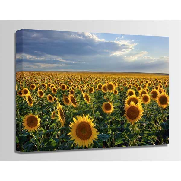 Picture of Dusk Sunflowers 24X16 *D