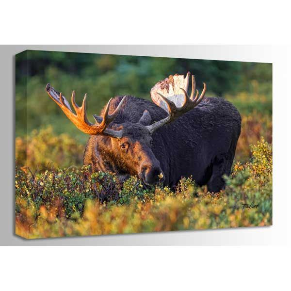 Picture of Moose Makes A Friend 36x24 *D