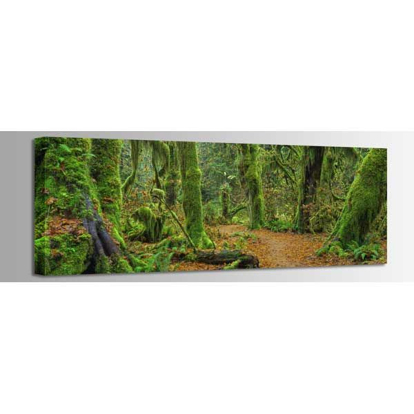Picture of Hall of Mosses 60x20 *D