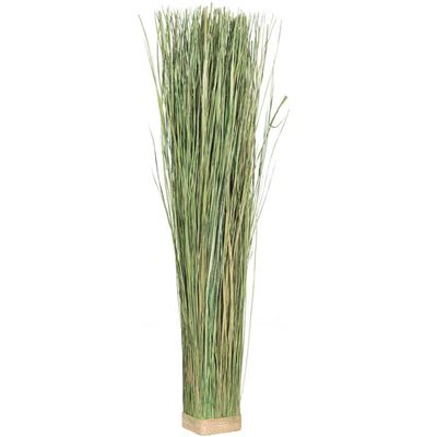 Picture of Green Decorative Grass