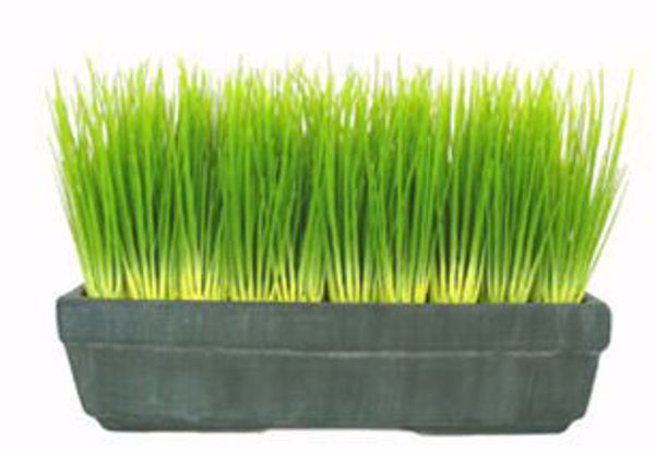 Picture of Malt Grass In Black Tray