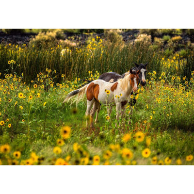 Picture of Painted Pony Paradise 24x16 *D