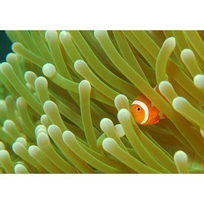 Nemo 16x24