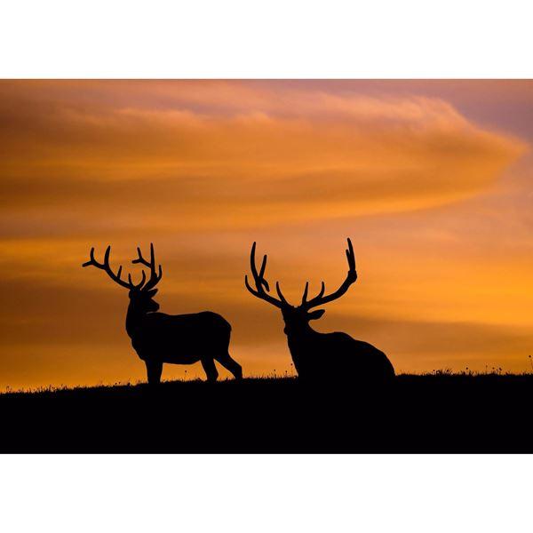 Estes Elk 16x24