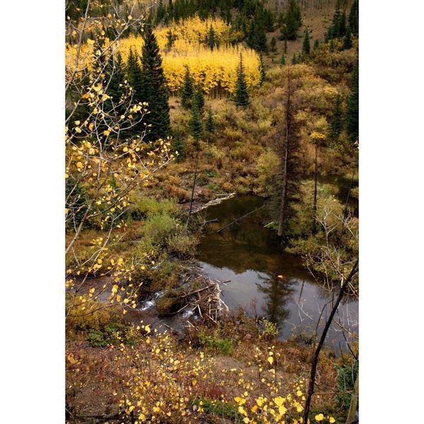 Fall in the Colorado Rockies 24x36