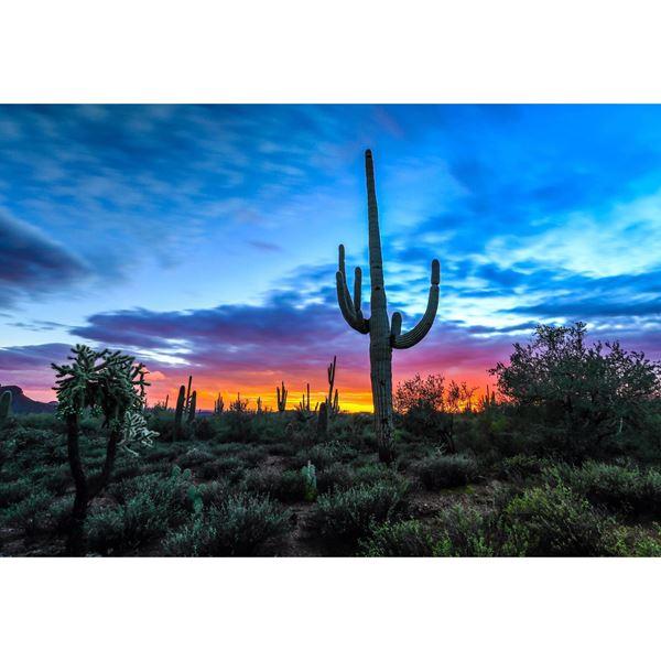 Majestic Sunset 32x48
