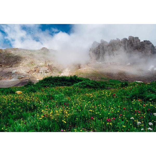 Wildflowers on Imogene Pass 36x24