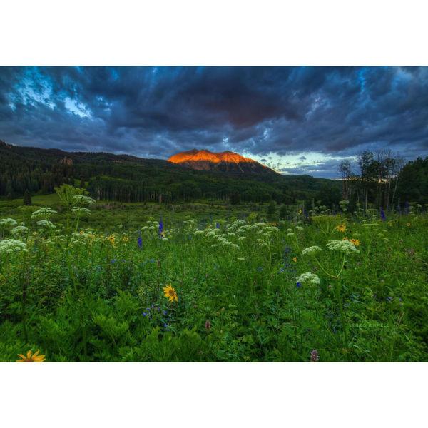Wildflowers Mountain Majesty