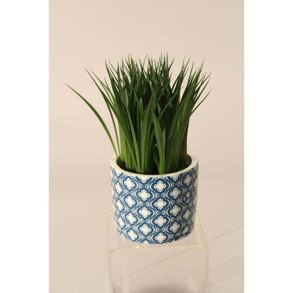Picture of Water Grass In Blue Patterned Pot