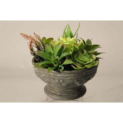 Picture of Succulents In Faux Stone Planter