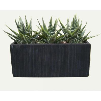 Picture of Aloe in Black Rectangle Terra Pot