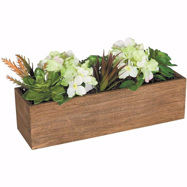 Picture of Succulents In Wooden Box