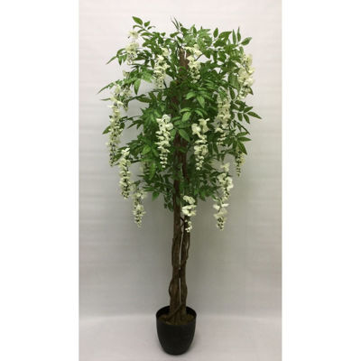 Picture of White Wisteria Tree