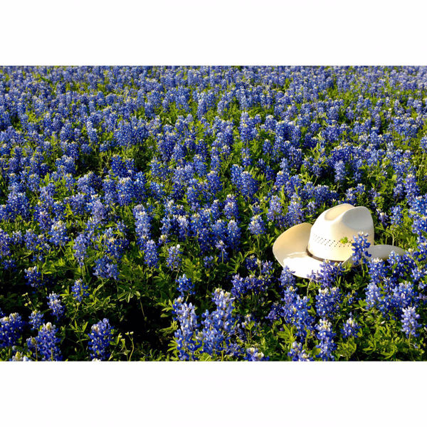 Picture of Cowboy Hat In Bed Of Flowers 32x48