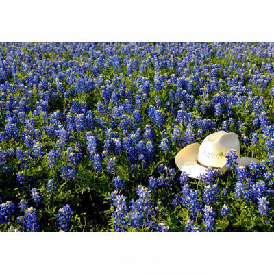 Picture of Cowboy Hat In Bed Of Flowers 32x48 *D
