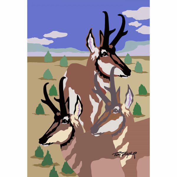 Picture of Pronghorn Cluster Cluster 24x36 *D