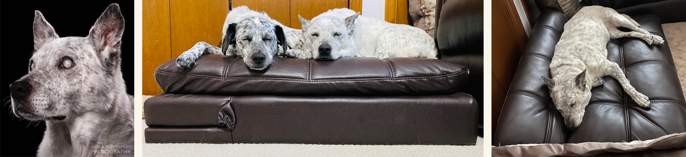 Blogger Spotlight | Blind Molly Tests Out Memory Foam Adjustable Pet Bed