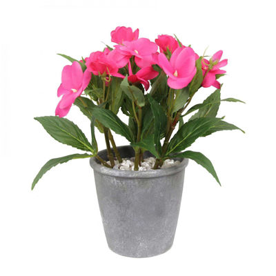 Picture of Pink Balsamine In Grey Pot