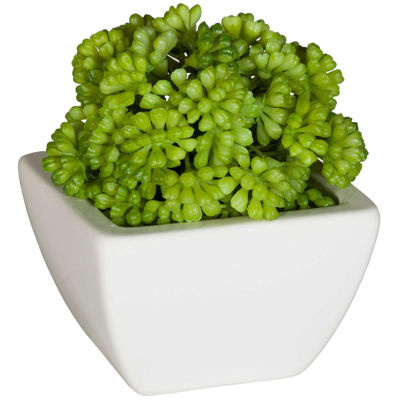 Picture of Round succulent in White Ceram