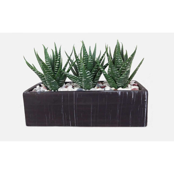 Picture of Aloe in Rectangular Pot