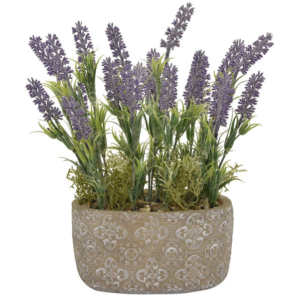 Picture of LAVENDER IN OVAL POT