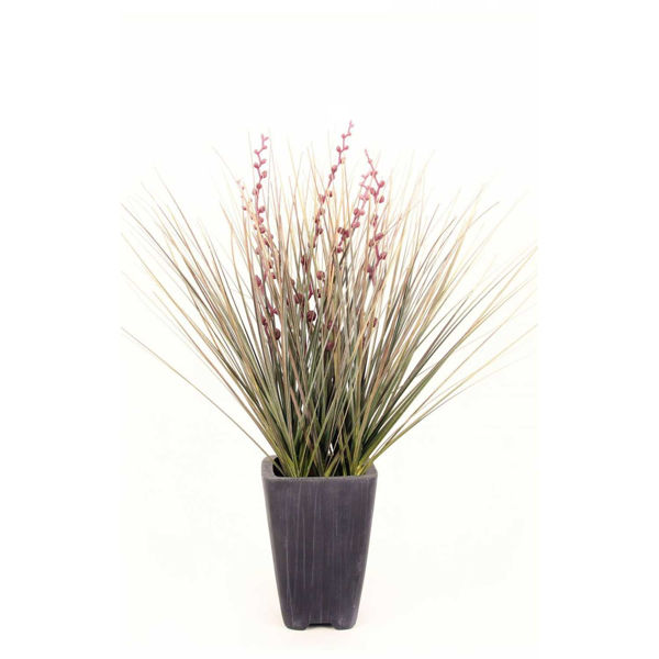 Picture of Onion Grass Mix In Square Terra Pot