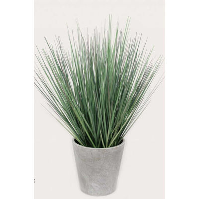 Picture of Tall Onion Grass In White Pot