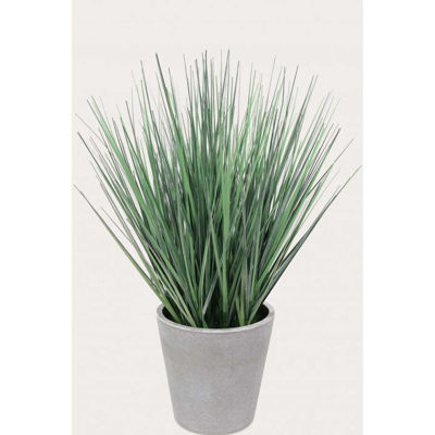 Picture of Onion Grass In White Pot