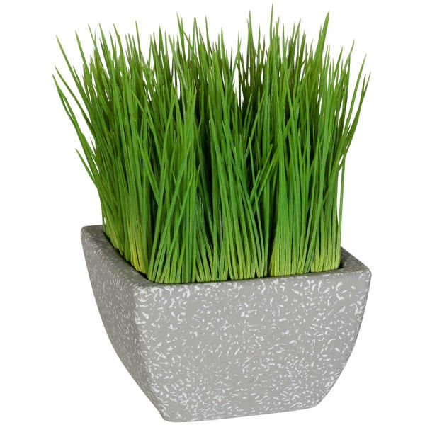 Picture of Malt Grass in Terracotta Pot