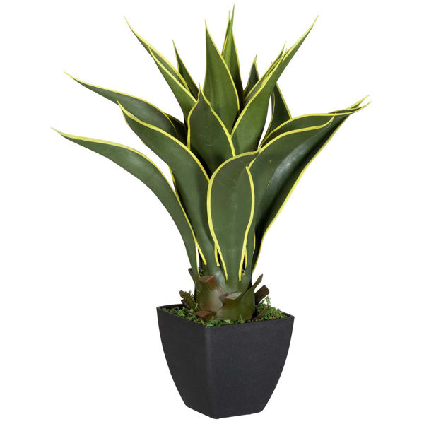 Picture of Green Yellow Agave Plant