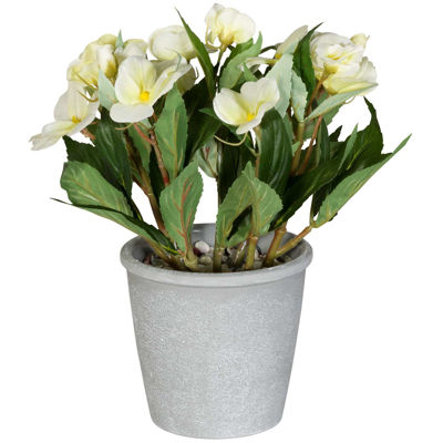 Picture of White Balsamine In Grey Pot