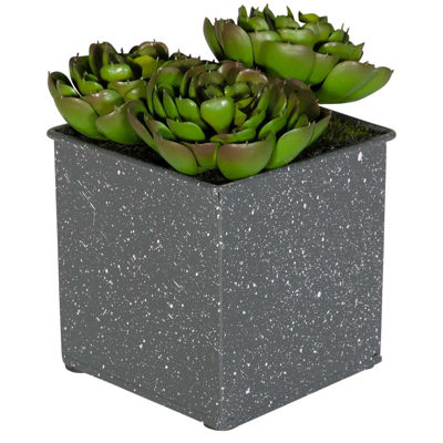 Picture of Succulents In Square Grey Vase