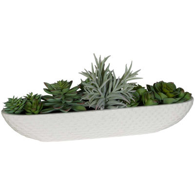 Picture of Succulents In Long Bowl