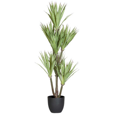 Picture of Yucca Tree In Pot