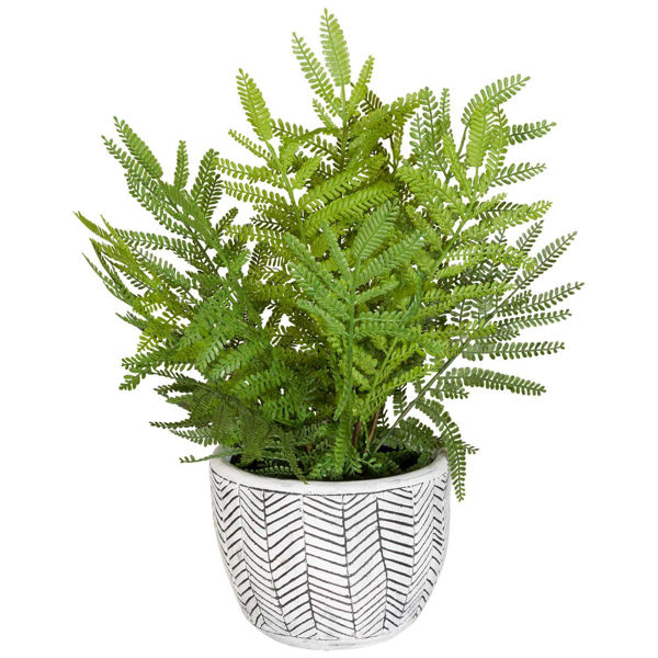 Picture of Fern In Round Container