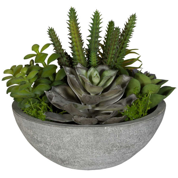 Picture of Succulents In Round Bowl