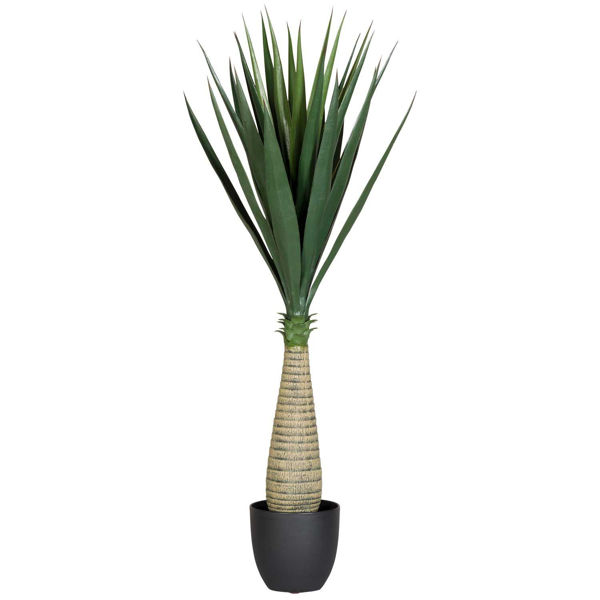 Picture of Sisal Tree With Pot
