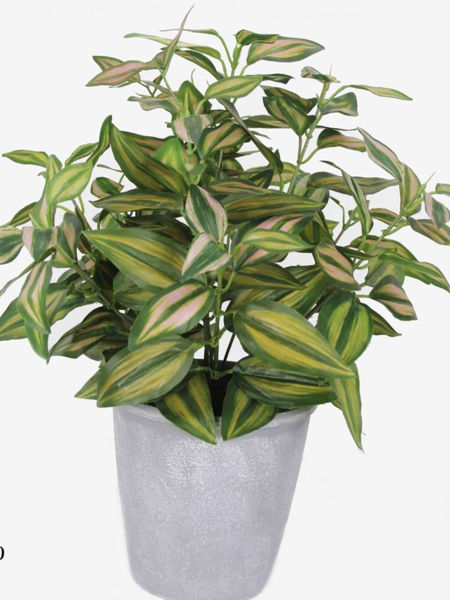 Picture of Ivy in Melamine Pot