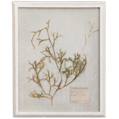 Picture of Framed Botanical Print