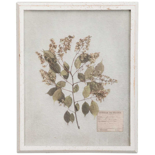Picture of Framed Botanical Print