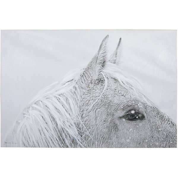 Picture of White Horse Canvas