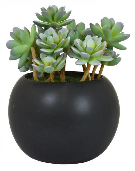 Picture of Faux Succulent In Black Pot