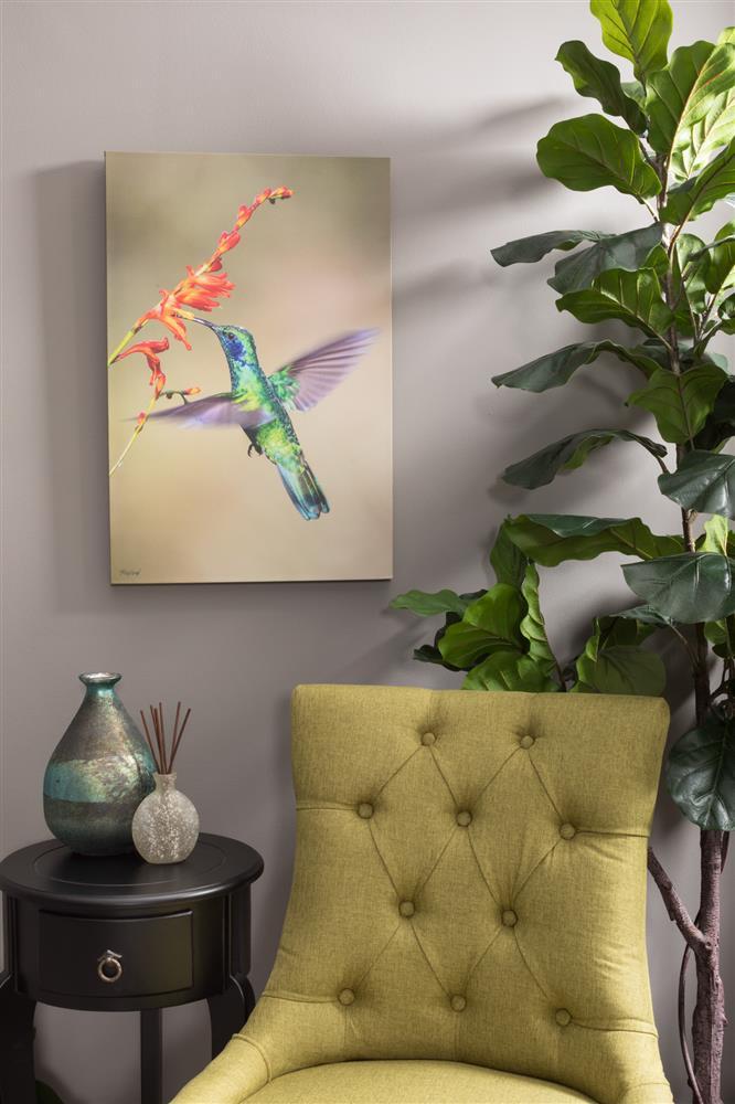 aotw_hummingbird