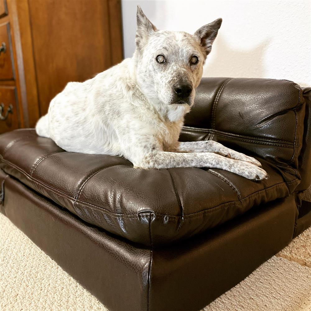 Blind Molly Pet Bed